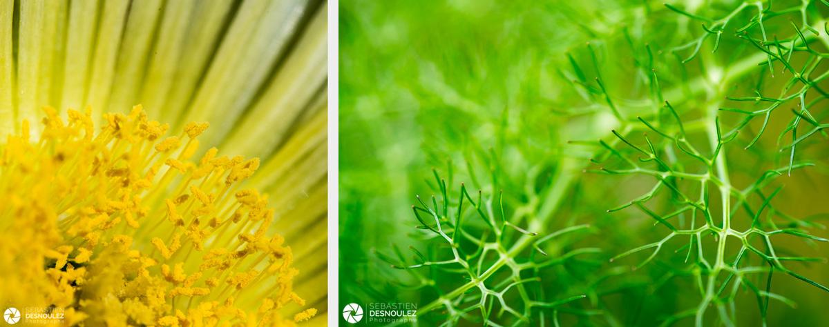 <strong>Pistils & Co<span><br /><small><figcaption>Photos de pistils de fleur de Carpobrotus jaune et feuillage photographiés en macrophotographie parSebastien Desnoulez</figcaption><small><br /><b>voir en plein écran</b></span></strong><i>→</i>