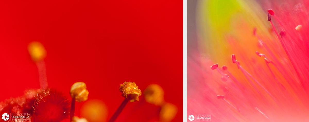<strong>Pistils & Co<span><br /><small><figcaption>Photos de pistils de fleurs d hibiscus et de callistemon photographiés en macro-photographie parSebastien Desnoulez</figcaption><small><br /><b>voir en plein écran</b></span></strong><i>→</i>