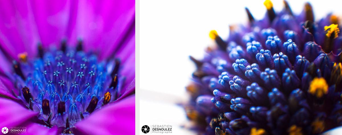 <strong>Pistils &#038; Co<span><br /><small><figcaption>Photos de pistils de fleurs de marguerites du Cap photographiés en macro parSebastien Desnoulez</figcaption><small><br /><b>voir en plein écran</b></span></strong><i>&rarr;</i>