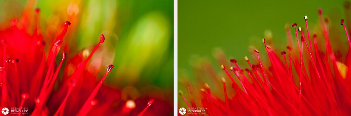 <strong>Pistils & Co<span><br /><small><figcaption>Pistils de fleur de callistemon photographiés en macro - Photos : ©Sebastien Desnoulez</figcaption><small><br /><b>voir en plein écran</b></span></strong><i>→</i>