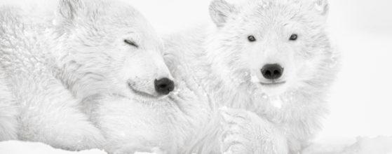 Arctic Emotion - Photo : © Kyriakos Kaziras