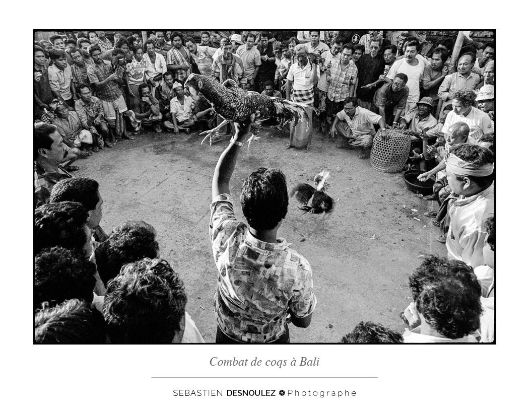 <strong>Galerie Photo Noir et Blanc<span><br /><small><figcaption>Combat de Coqs, Bali, Indonésie - Photo : Sebastien Desnoulez Photographe</figcaption><small><br /><b>voir en plein écran</b></span></strong><i>→</i>