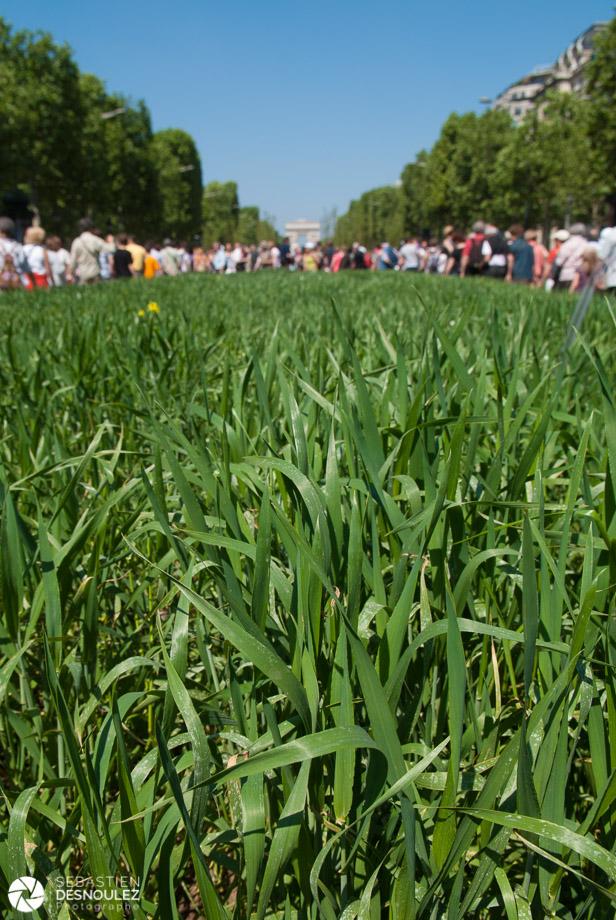 Végétalisation des Champs-Elysées