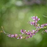 Arbre en fleurs au printemps - Photo : © Sebastien Desnoulez photographe d'ambiances et de paysage