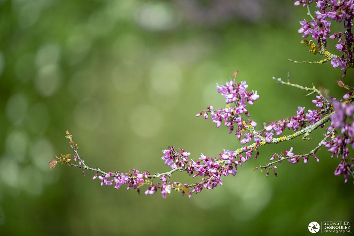 Branches d'arbres en fleurs au printemps