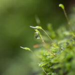 Mini écosystème après la pluie - Photo : © Sebastien Desnoulez photographe d'ambiances et de nature