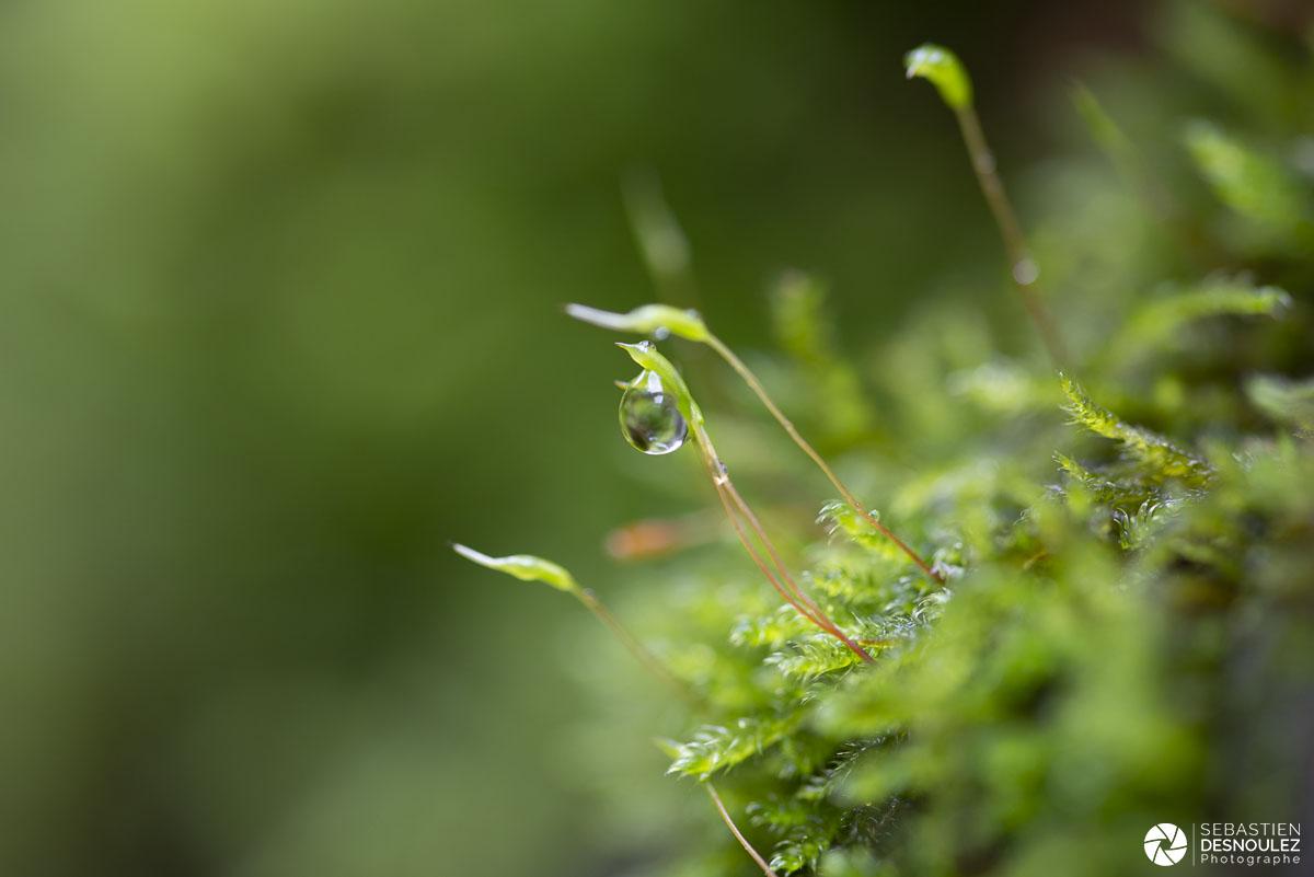 Mini écosystème après la pluie